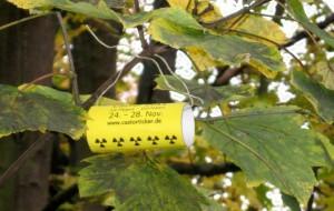 Castorrolle im Herbstbaum